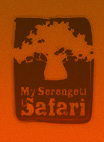 My Serengeti Safari